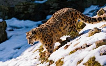 GPP Nomadic | Himalayas & Snow Leopards