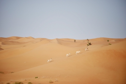 #unseen Photo Trail | Dubai Desert Conservation Reserve