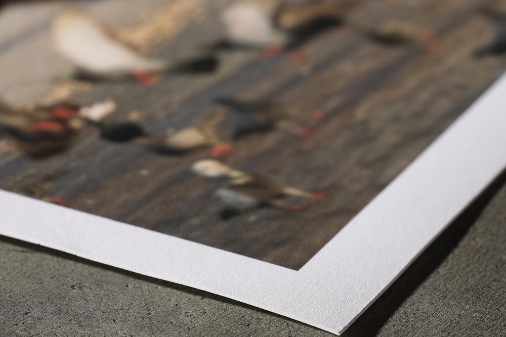 GPP: Paper & Canvas Options